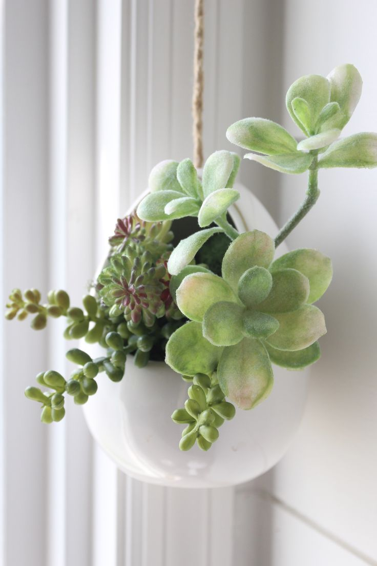 How To Make Mini Succulent Arrangements Hanging