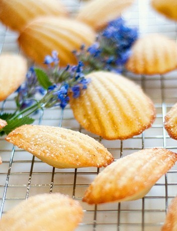 Deborah Lawrenson: Proust's madeleines: Cup, Charming Madeleines, Desserts, Sweets, Food, Madeleines Recipes