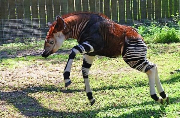 21animals that you haven't heard ofbefore