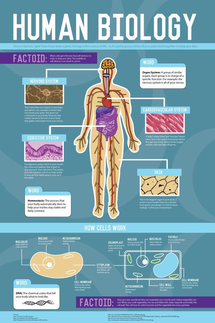 Biology infographic natalie jost jost jost reamey