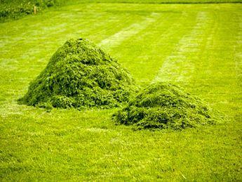 Si on paille juste après la tonte, étaler en couche mince, 2 cm maximum. Eviter de faire des petits tas car ils fermentent très vite et se putréfient, et éviter de mettre une couche trop épaisse à la base des plantes. Si on fait préalablement sécher les tontes de pelouse (1 ou 2 jours au soleil), on peut pailler jusqu'à 10 cm ce qui prolonge la durée du paillis jusqu'à 6 mois.