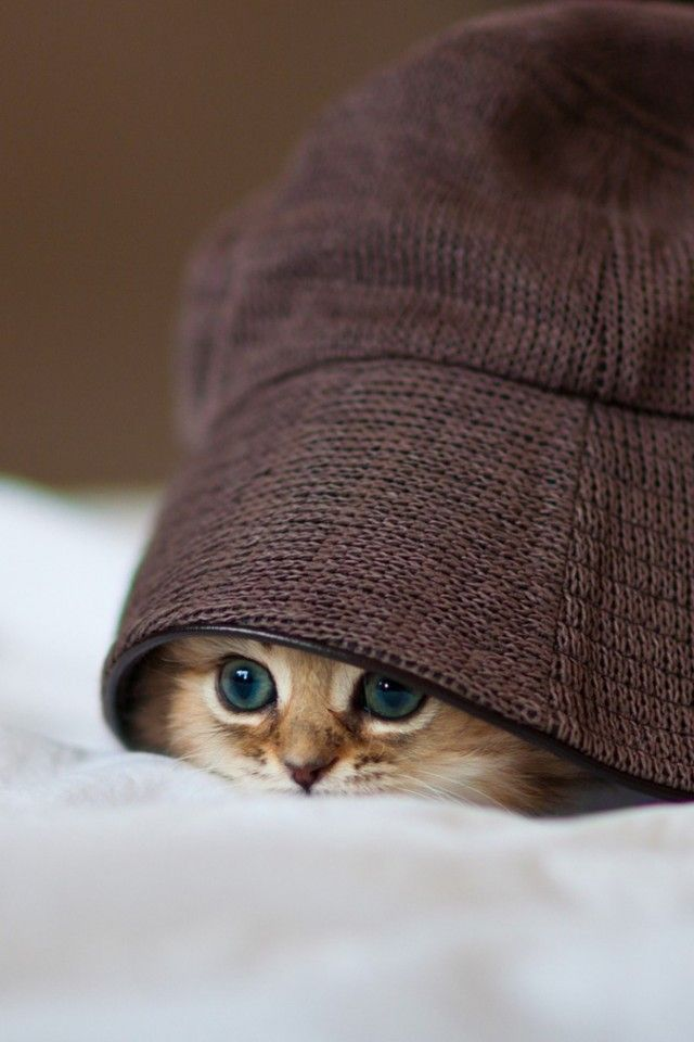 invitinghome:  Hello there | cute cat in a hat