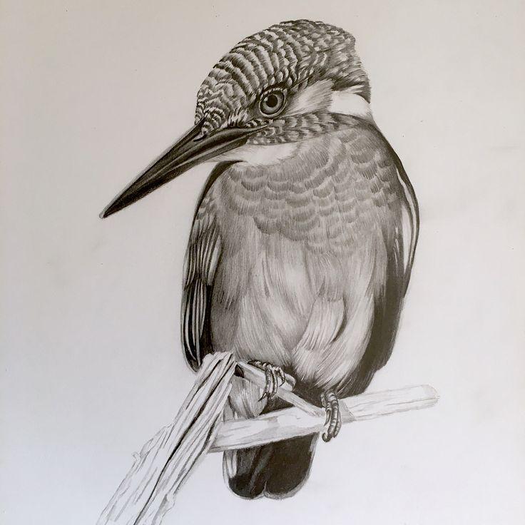 интересные картинки карандашом птиц предлагаем