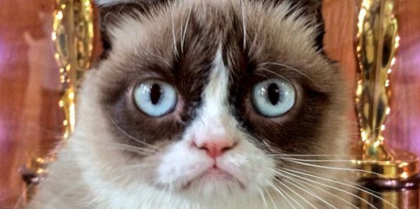classement chat influents grumpy cat
