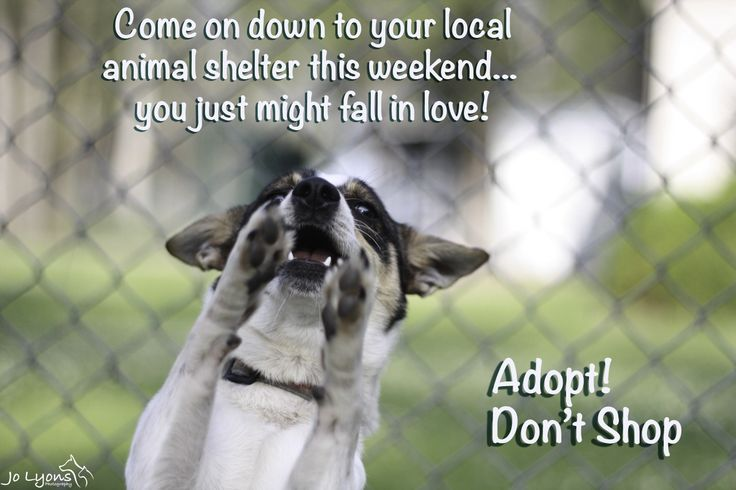 Adopt... don't shop.  Beautiful animals available every single day at your local animal shelter or pound.