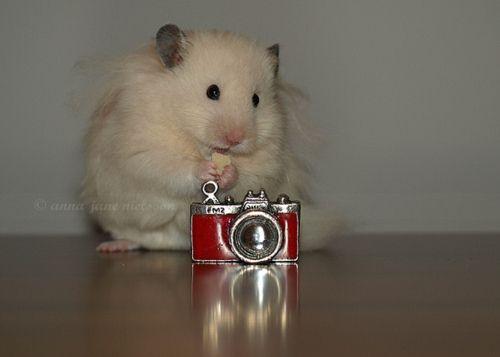 Snappin' photos - Cute Hamster