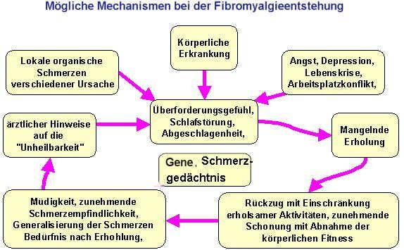 Fibromyalgie                                                                                                                                                                                 Mehr