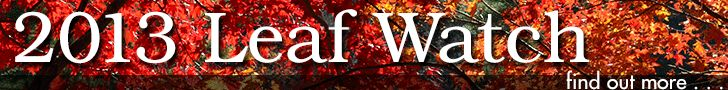 Leaf Watch -- Website Highlights Best Leaf Color in Georgia's State Parks   Georgia State Parks
