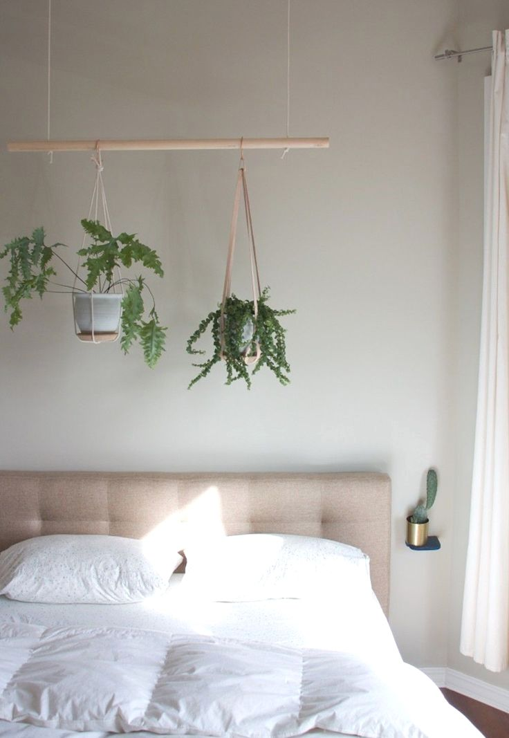 feng shui living room items  indoor plants bedroom