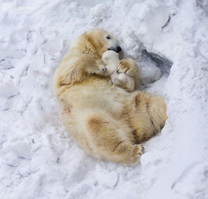 #white #bear