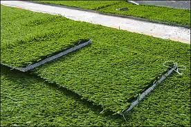 Synthetic Lawn Perth offers a premium quality level of made turfs in Perth at moderate expenses to both private and business customers.