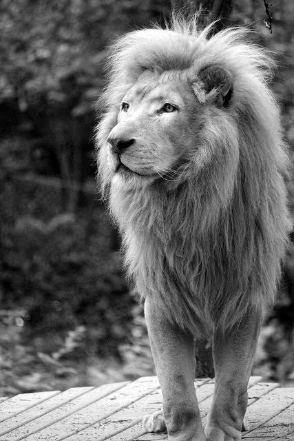 Aslan...My God is not dead, He surely is alive. Living on the inside, roaring like a lion!