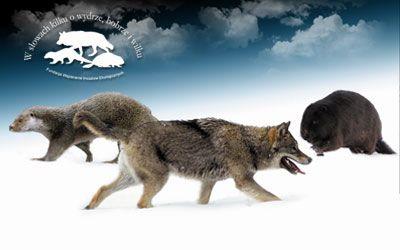 W słowach kilku o wydrze bobrze i wilku