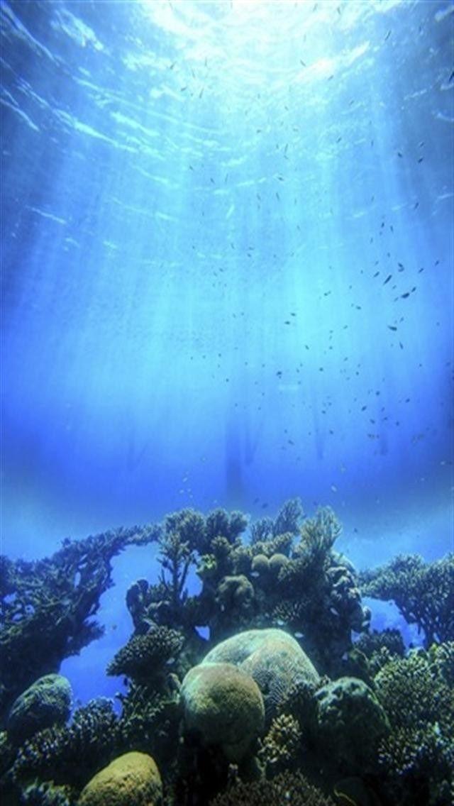 Underwater Marine Biology Reef Sky Water Coral Reef