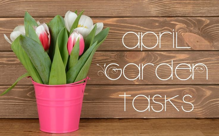19 Garden Tasks to Accomplish in April - GardenBunch~Spring is finally, gloriously here! It may be rainy where you are, or you may even have a quick dusting of snow, but it's here. Time to break out the garden tools for the season, and get to work outside! Things will be warming up before you know it. Here are 19 garden tasks to accomplish in April
