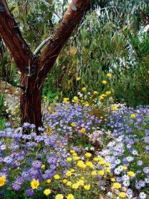 Australian natives in a cottage garden