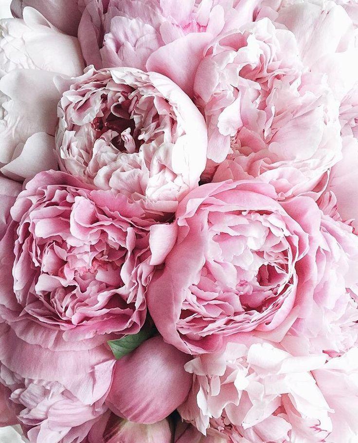 Картинки на рабочий стол айфона цветы мастики