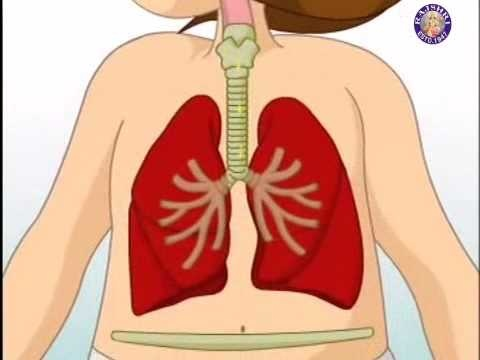 The Respiratory System ...I could not resist....I pinned this because I am a Respiratory Therapist..