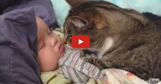 cats and babies... too cute! ↑ Click To Watch The Video