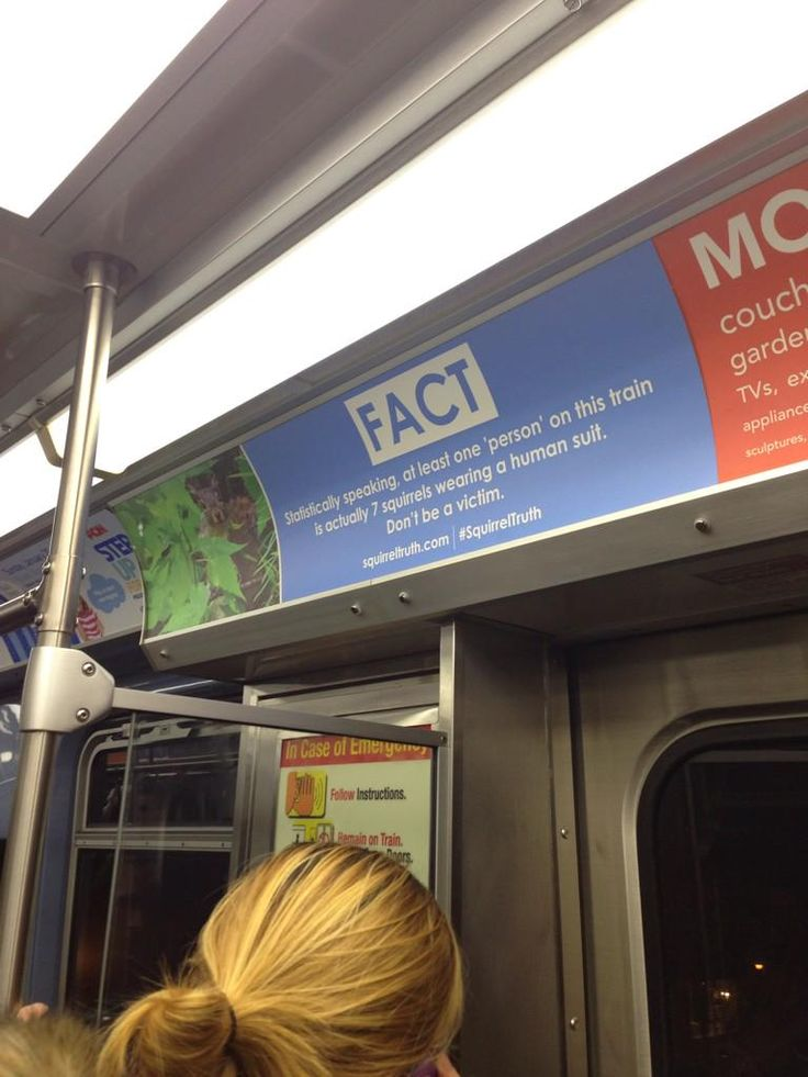 TIL Squirrel facts on the subway