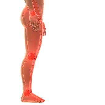 En nuestro cuerpo hay más de 600 músculos, nos sirven éstos ayudan a movernos, levantar objetos, pero también ayudan a que la sangre corra por el cuerpo, y que el corazón lata. Otros intervienen en el sistema digestivo. Los llamados músculos esqueléticos, tienen ligamentos que conectan los músculos con los huesos. Cada clase de músculo tiene un tejido propio y muchas pequeñas fibras que les dan elasticidad. Hay 3 tipos de músculos: Músculo liso, Músculo cardíaco Músculo esquelético Los…