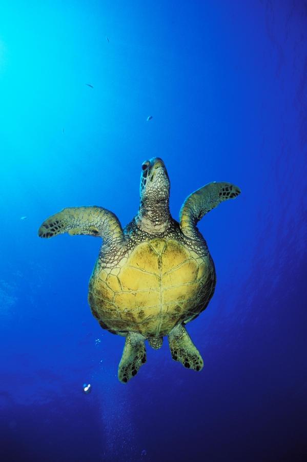 110 Best Endangered Species Images On Pinterest Animal