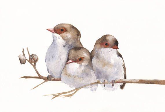 Chochines pintura arte - W040 aves fauna arte naturaleza tamaño A4 impresión de lámina de pared acuarela - arte de pájaros - impresión - impresión de vida silvestre