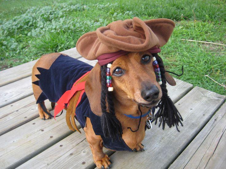 Winner: Jack Sparrow - read more here: http://www.celebritydachshund.com/2013/10/27/halloweenie-dachshund-costumes-contest/