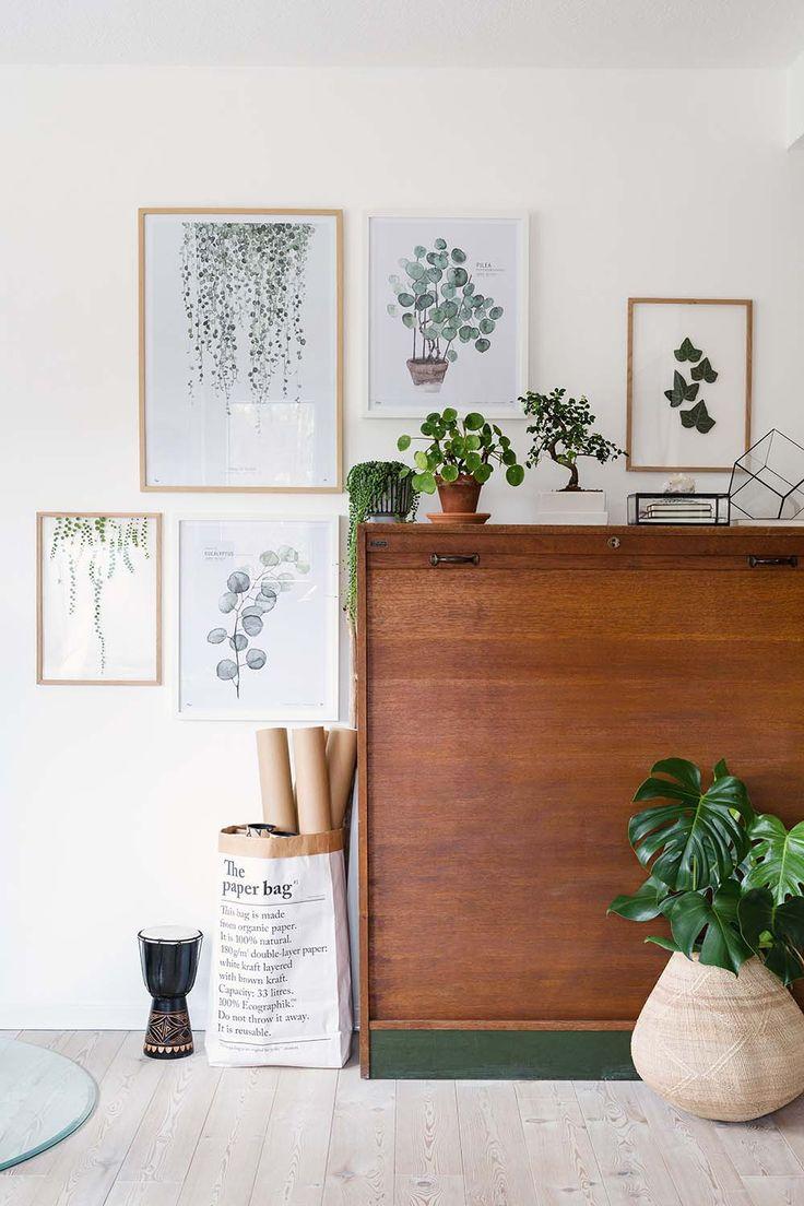 Matching plants with botanical illustrations.