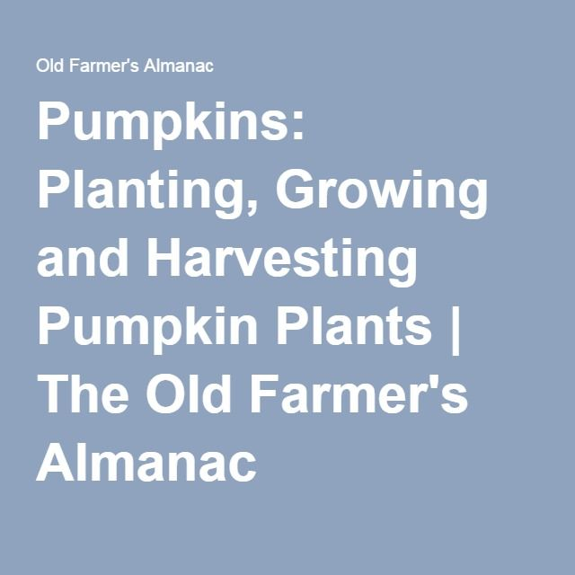 Pumpkins: Planting, Growing and Harvesting Pumpkin Plants | The Old Farmer's Almanac