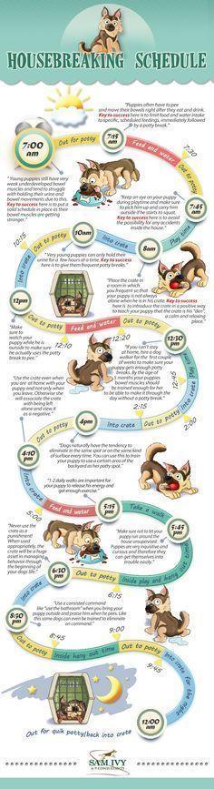 Dog Care Tips.. Sam Ivy K9's Housebreaking Schedule #puppypottytrainingschedule #Catcaretips