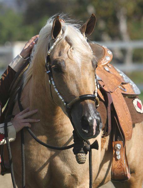 horses laurie horses horses quarter horses horses barns horses horses ...
