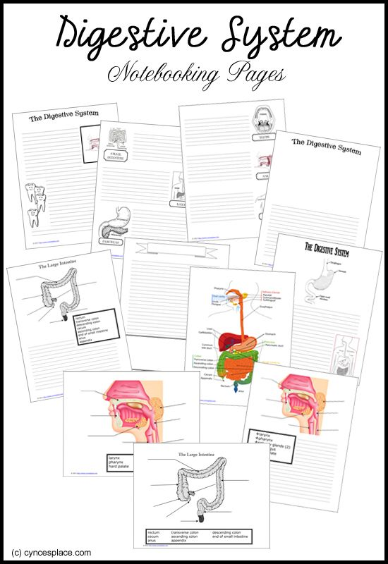 Notebooking Pages: free resources to nail down your anatomical understanding…