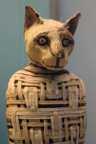 When a family cat died in ancient Egypt, family members would mourn by shaving off their eyebrows. They also held elaborate funerals during which they drank wine and beat their breasts. The cat was embalmed with a sculpted wooden mask and the tiny mummy was placed in the family tomb or in a pet cemetery with tiny mummies of mice.