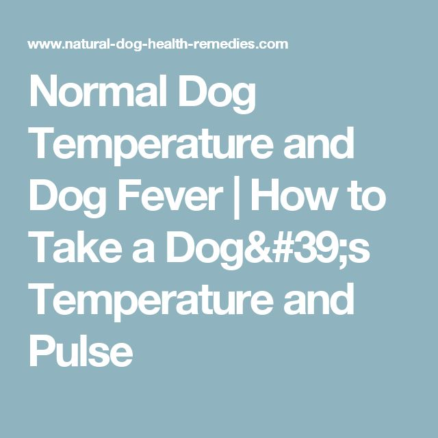 Normal Dog Temperature and Dog Fever | How to Take a Dog's Temperature and Pulse