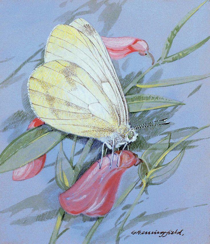Нежная акварель...Цветы и Бабочки | Gordon Beningfield . Обсуждение на LiveInternet - Российский Сервис Онлайн-Дневников