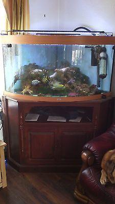 Juwel-Trigon-350-ltr-Corner-Aquarium-Fish-Tank