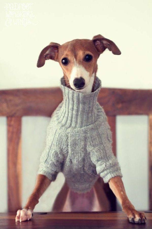 297 best Hundebekleidung images on Pinterest | Hunde, Haustiere und ...