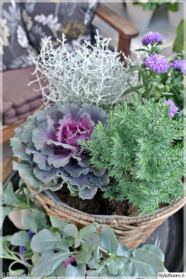 Best 25 autumn garden ideas on pinterest white - Winter flowers for balcony ...