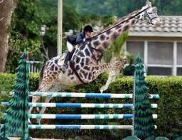 geen paard maar wel leuk