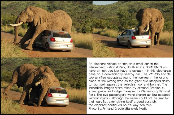 vw polo, african elephant itchy, itchy vw elephant https://www.facebook.com/ArmandGroblerPhotography/