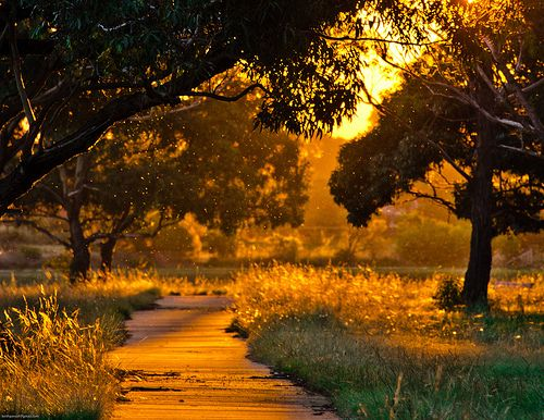 .: Love Fall, Fall Sunsets, God Plans, Autumn, Trees, Morning, Summer Night, Photo, Golden Hour