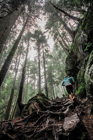 Face the challenges of the trail - North Conway's trails - Trail running