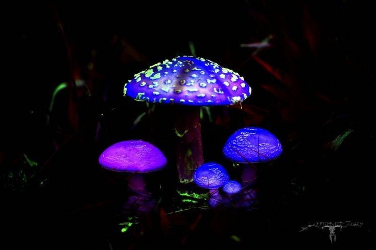 Fairyscape 5 Photo - Visual Hunt