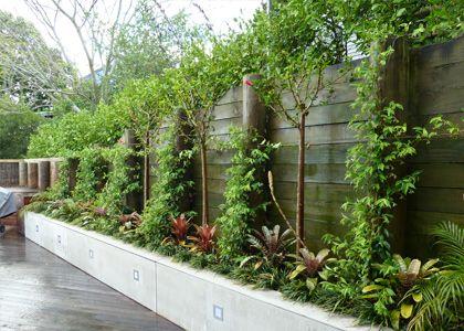 Smalle plantenbak langs de schutting; mooie beplanting van boompjes, struikjes en vaste planten