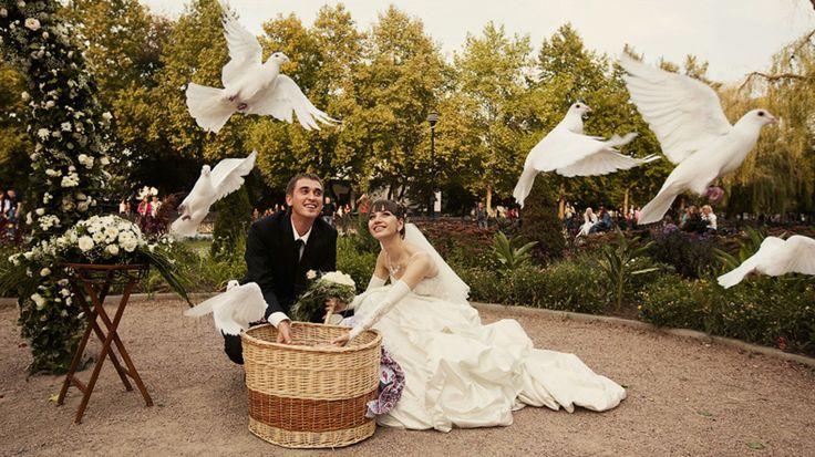 свадьба голуби: 20 тыс изображений найдено в Яндекс.Картинках