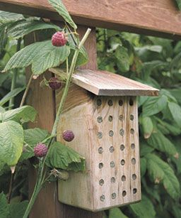 Bee House on Raspberry Trellis. To ensure pollination of your raspberries, build