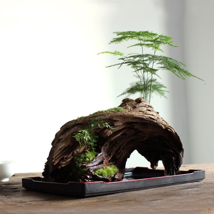 【浮生时光】微景观植物苔藓 文竹书房茶室山水摆件 盆栽礼品-淘宝网