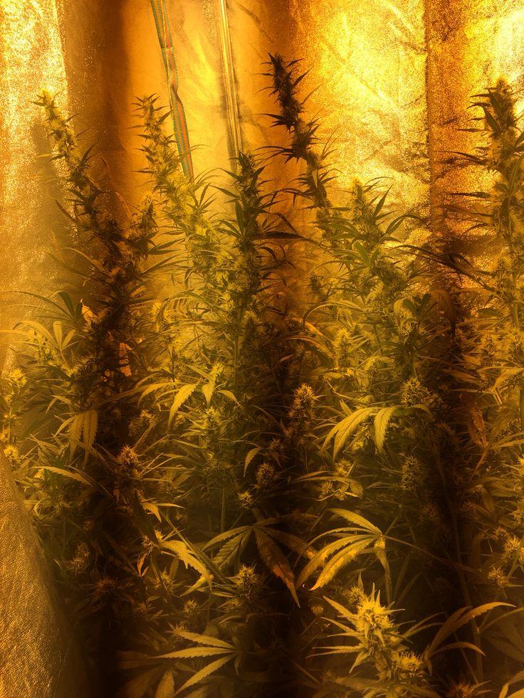 Plantas ricas medicinales.