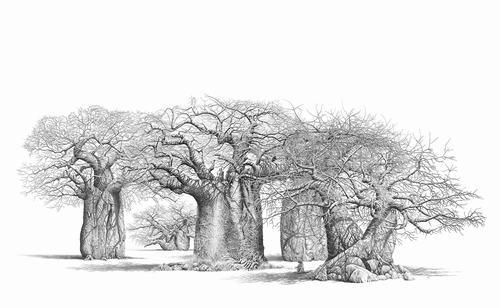 Bowen Boshier - South African Wilderness Pencil artist